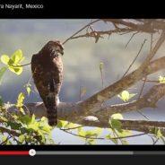 Bird Watching at Punta el Custodio, Nayarit, Mexico